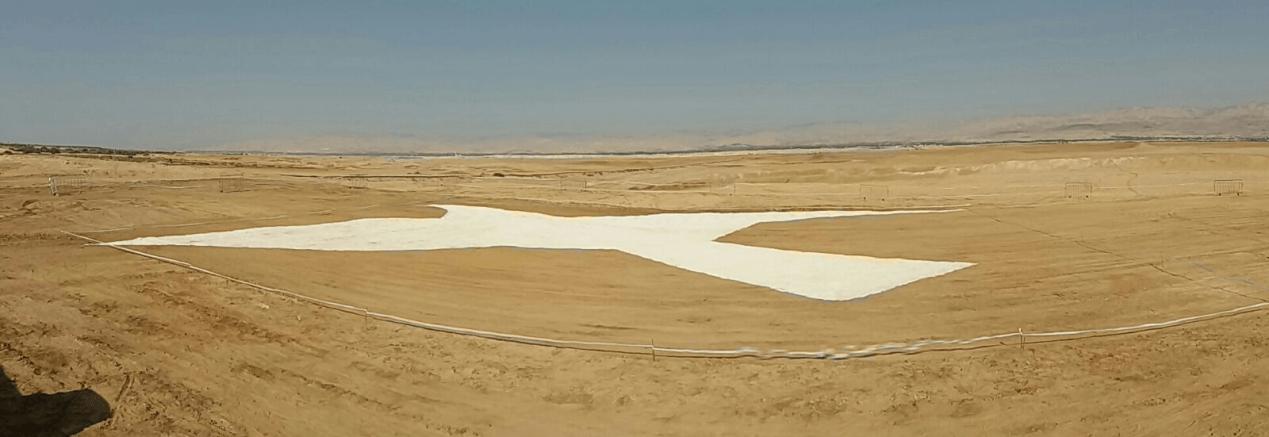 יונת השלום במדבר